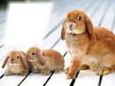 Easter Paques Gothika cadre lapin