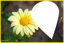 laly fleur