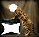 Le chat tigre et le mystère de la boîte