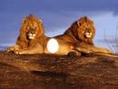 TROIS LIONS