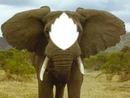 UN elephant