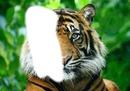 Tête mi-tigre mi-humain