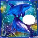 J'adore les  dauphins