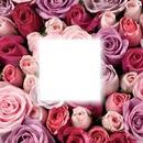Rose Rose B