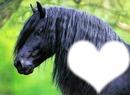 cheval noir coeur