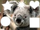 jaime les  koala