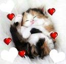 un chat avec des coeurs  3 photos