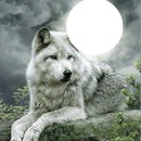 moon over wolfe