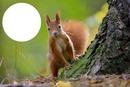 Au  coeur  de l'écureuil