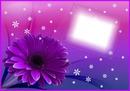 Carte postale floriane