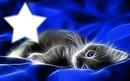 chat étoile
