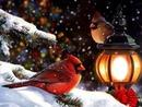 oiseaux noel