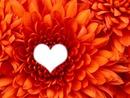 La fleur qui a du coeur!
