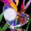 borboleta / butterfly / papillon