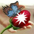 Rosa roja con mariposa