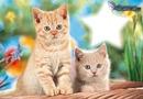 chaton etoile