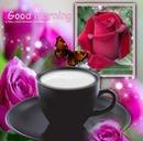 rose et café