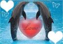 dauphins love 2 cadres coeur