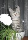 1 chat grisounet dans un pot de plante 1 photo cadre