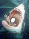 En la boca del tiburon