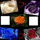 amour de rose