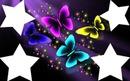 3 papillons et 4 photos