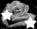 Un amour d'étoile