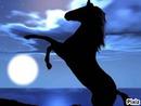 Cheval D'océan