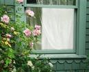 Cadre fenêtre avec roses
