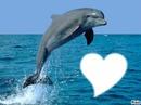 jtd les dauphins