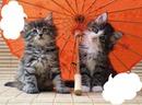 2 chatons sous une ombrelle 2 photos cadres