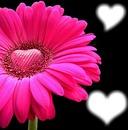 le fleur aime