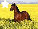 Le cheval dans la prairie