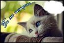 chaton tu me manque