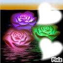 coeurs dans les roses