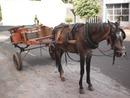 2 fotos cavalo