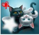 Katze-Miau Miau