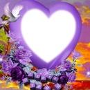 Coeur violet avec une colombe