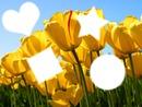 les tulipes et moi !!!