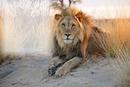 franco leon