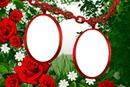 aros y rosas