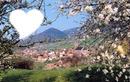 printemps en Alsace
