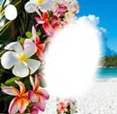 fleur des îles