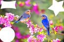 nath oiseaux