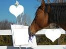 love équitation