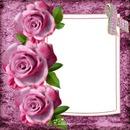 Julita02 Rosas y listón rosa