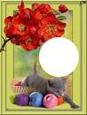 chaton et pelotes
