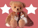 ours avec 2 chatons 2 photos