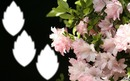 *Fleurs Printaniére*