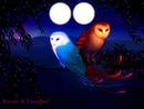 belle oiseaux